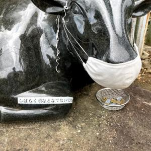 夏至の日の筑波山神社 牛さんのマスク