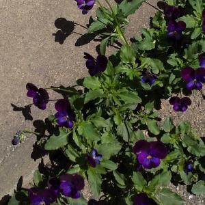 花ざかりの庭