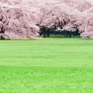のんびり花見デートしたい!【2020年】東京花見・名所穴場スポット10選