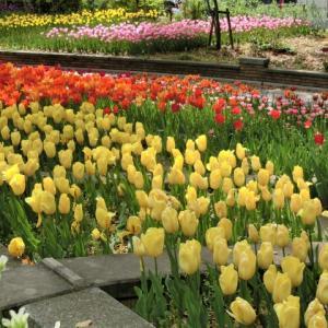 春は、のんびりお花畑デートしたい!2020横浜デートスポット6選