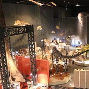雨の箱根旅行なら生命の星・地球博物館がオススメです