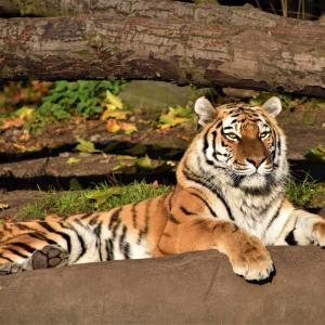 突き抜けるためには「Tigers型人材」になろう!