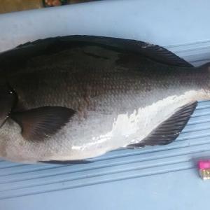2019年8月22日式根島釣り情報