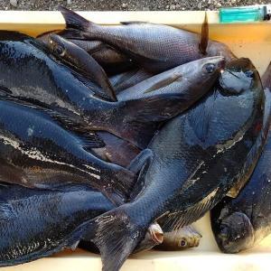 2020年1月11日式根島釣り情報