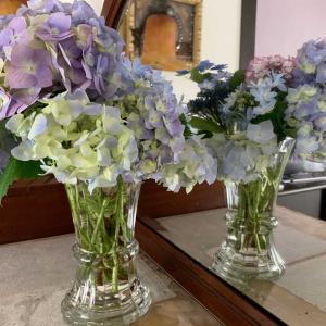 紫陽花の花言葉は仲良し