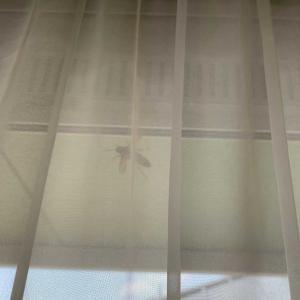 招かざる客 スズメバチが家に侵入
