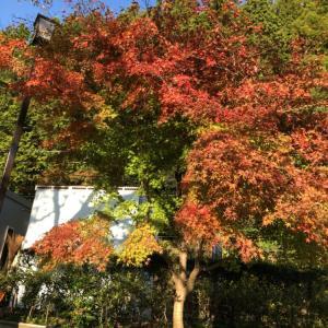 紅葉と桜がいっぺんに見られるのは感動的だけど...