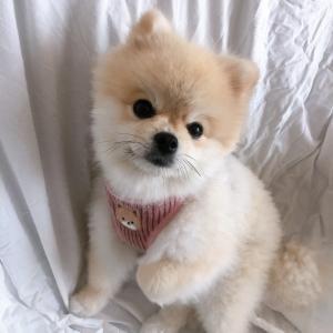 韓国犬用品ブランドCARMINE PROJECTできむこのハーネスを新調!