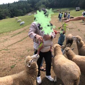 【韓国•ナメ】羊牧場(양떼목장 양모리학교)カップル、ファミリーおすすめ!