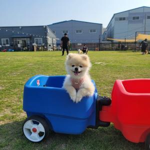コロナ隔離明けのキムさんのきむこDAY★釜山•カンソ区ドッグランへ!