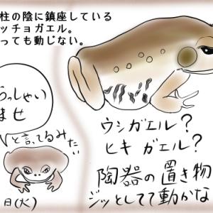 ウシガエル?ヒキガエル?食用ガエル?