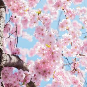 春と言えば新生活! 最高のスタートを切りたいアナタに素敵なアイテムを!【ジャグッズ紹介#9】