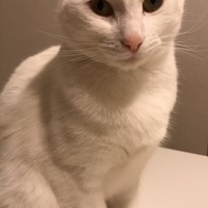 メンタリストDaiGo「猫との生活は謎解き」