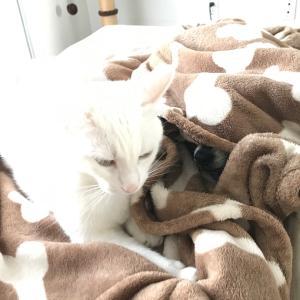 犬と猫、仲がいいのか悪いのか