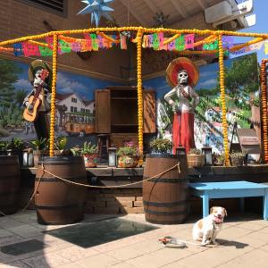 犬連れサンディエゴ旅行① Old Town&Coava Coffee