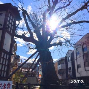 木の根橋(県指定天然記念物)