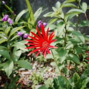 RICOH GRで花の撮影を最高に楽しむ極意とは