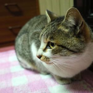最強のスナップ猫シューターなるか?RICOH GRで猫を撮影する