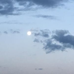 おりょー♪さんと有明の月