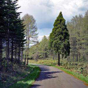 ある道の風景