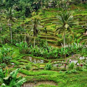 インドネシア9日旅〜その15〜バリ島・ウブド
