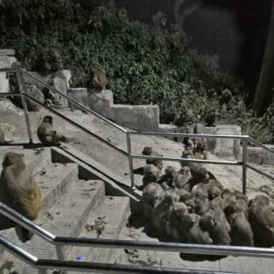 ネパール・一週間冒険旅〜その4〜首都カトマンズで猿の群れに絡まれる!