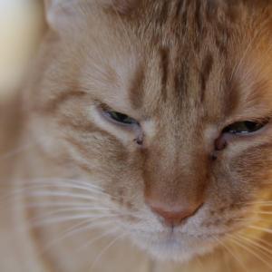 猫が目をこする。それはどんな病気?対処法など