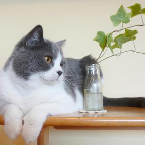 猫を飼いたいけどアパート住まい。猫を飼うには?