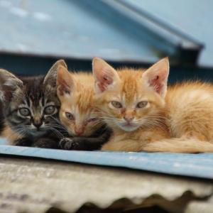猫を捨てるのは重罪。それは「遺棄」という犯罪です