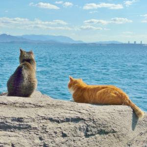 猫が長生きするために飼い主がすること