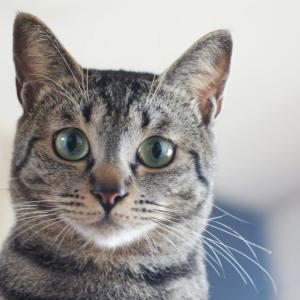 猫の目の色がいつもと違う?考えらえる病気は?