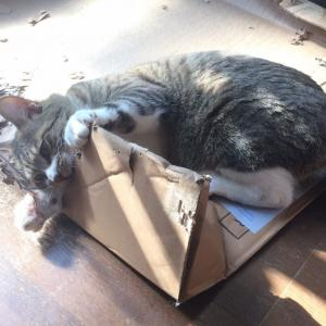 猫が他人の所有物を傷つけてしまったら…?訴えられる?