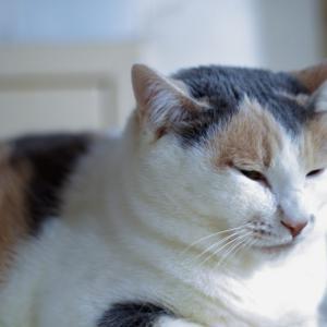 猫の鼻から鼻水が出る