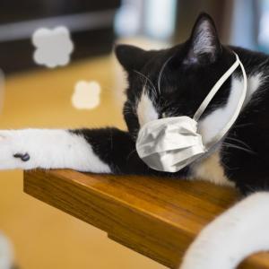 猫の涙目は猫風邪のサイン?季節の変わり目に注意