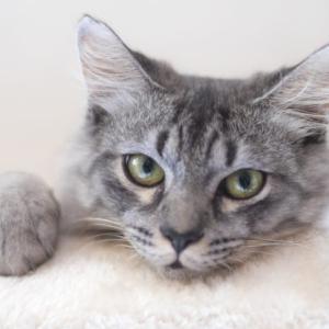 猫の外耳炎とは…?