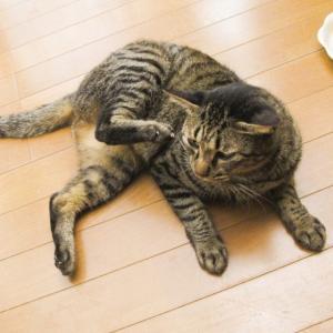 猫が頭をかたむける、体がよろけると…?