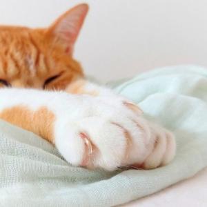 猫の爪を切るコツとは。1日1本がいい?