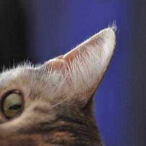 猫の中耳炎とは…?症状と原因