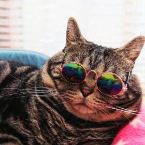 白猫に紫外線対策はしていますか?猫だって日焼けします。