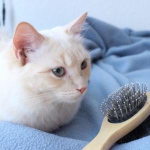毎日のブラッシングで猫の新陳代謝をアップ!