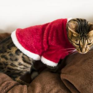 家猫にストレスを与えない部屋づくり
