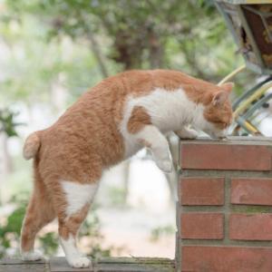 猫にとって危険な感染症について(猫エイズ、猫白血病)