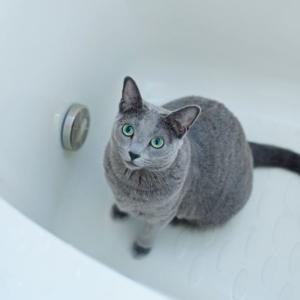 猫にお風呂は必要なの?素朴な疑問