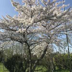 春🌸だ!!
