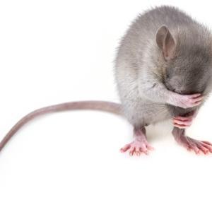 「ネズミの楽園」実験