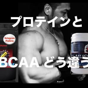 【Youtube紹介】プロテインとbcaa