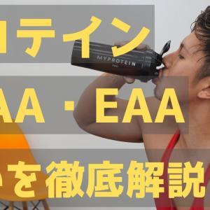 【Youtube紹介】プロテイン、BCAA、EAAの違いを日本一分かりやすく解説!