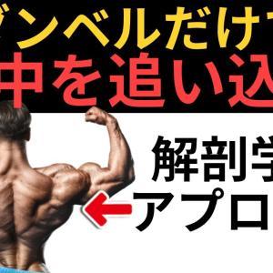 【Youtube紹介】背中全体をダンベルだけで鍛えられる最強3種目&ダンベルとベンチだけでできる筋肥大プログラム【背中トレ】
