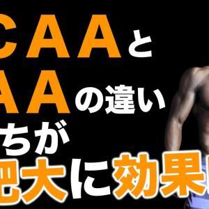 【Youtube紹介】【BCAAとEAAの違い】どっちが筋肥大に効果的?|くのまさ筋トレチャンネル|筋トレ・ダイエット・ストレッチ|名古屋のパーソナルトレーナー久野嵩正|パーソナルトレーニングジムサイナス