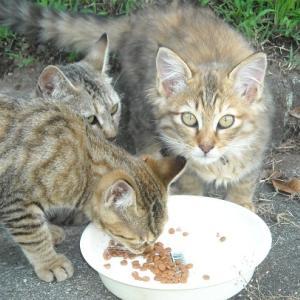 三毛猫セツコ